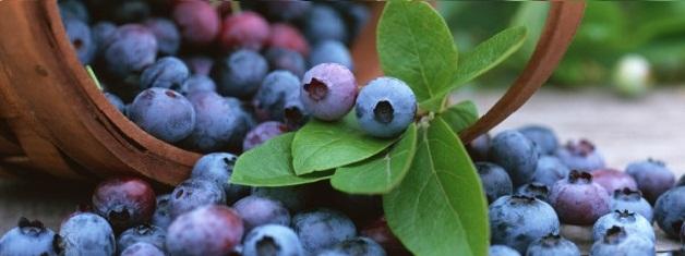buah-blueberryl;;l;l